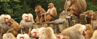 efecto monos del kilimanjaro